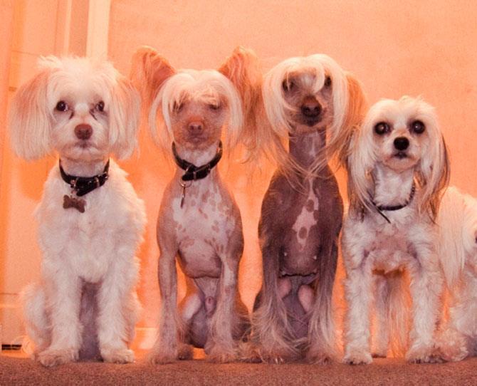 Allergy Alert Dog Breeds